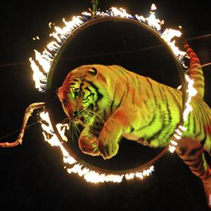 Цирки Богородского