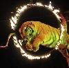 Цирки в Богородском
