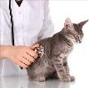 Ветеринарные клиники в Богородском